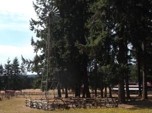 Alpaca farm scene taken on the road to the winery