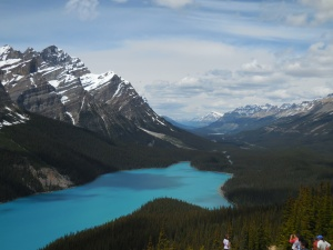 Lake Peyto at Bow Summit.  Elevation 6,965