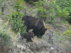 Grizzly and her cubs