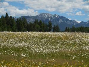 Wild Flowers...Wow!