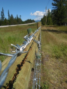 Shiny and new barbed wire.  Not sure what it has to do with things, but it caught my eye
