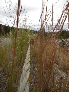 Yukon guardrail